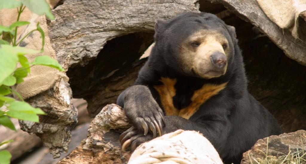free-the-bears (2)